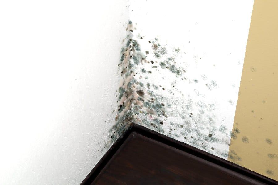 humidite ascensionnelle